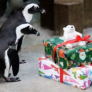 Christmas At Paignton Zoo Torbay Council